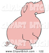 Clip Vector Art of a Mad Pink Pig Standing and Facing to the Right and Clenching Its Fists by Djart