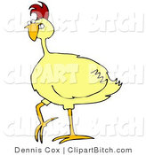 Clip Vector Art of a Plump Mad Yellow Chicken Gritting Its Teeth by Djart