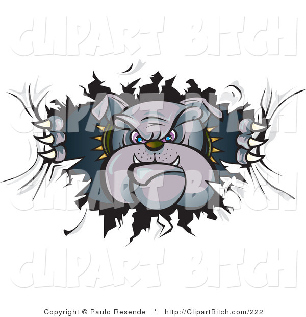 Clip Vector Art of a Tough Gray Bulldog in a Spiked Collar, Tearing a Hole Through a Wall or Paper and Looking Through